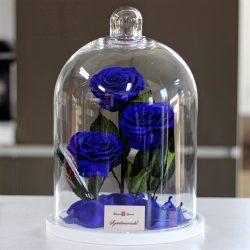 Nagy méretű 32 cm búrába zárt 3 szálas Örök Rózsa / Forever Rose - Sötétkék
