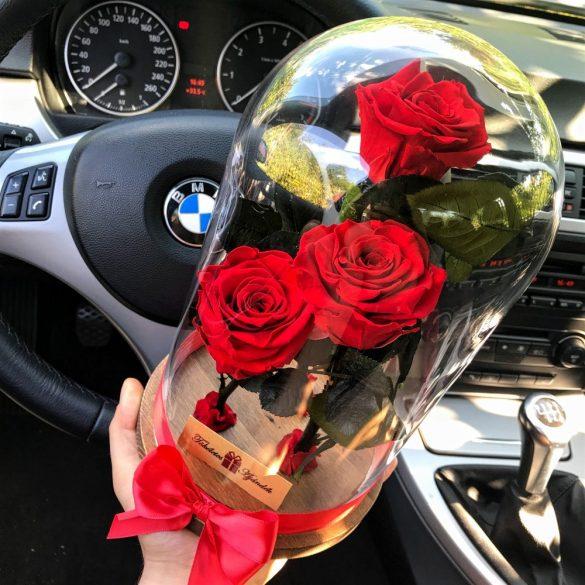 Nagy méretű búrába zárt 3 szálas Örök Rózsa / Forever Rose - Vörös