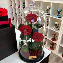 Nagy méretű 50 cm búrába zárt 3 szálas Örök Rózsa / Forever Rose - Vörös