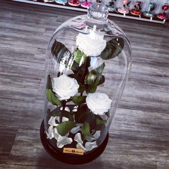 Nagy méretű 50 cm búrába zárt 3 szálas Örök Rózsa / Forever Rose - Fehér
