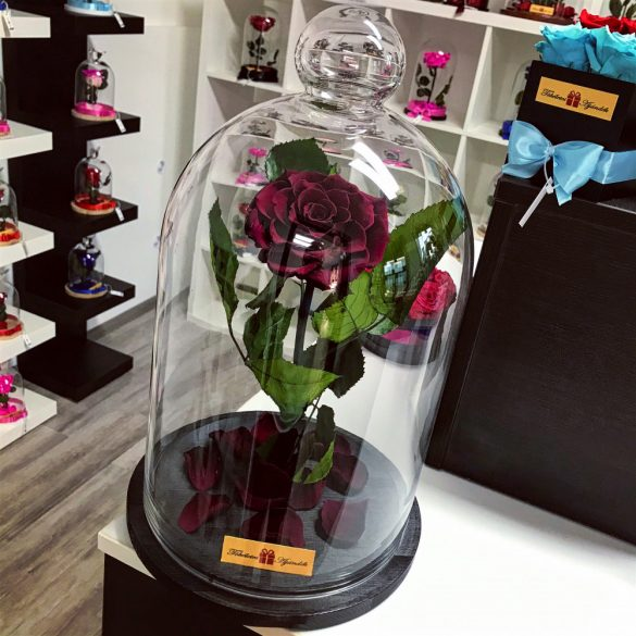 Nagy méretű 45 cm búrába zárt KING Örök Rózsa / Forever Rose - Burgundy