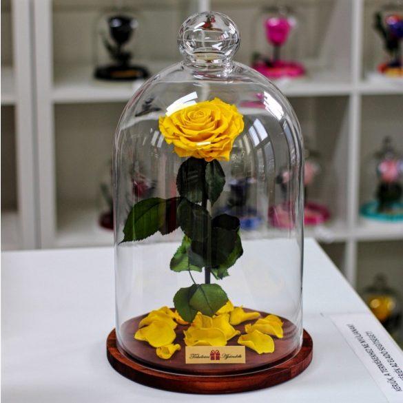 Nagy méretű 45 cm búrába zárt KING Örök Rózsa / Forever Rose - Citromsárga