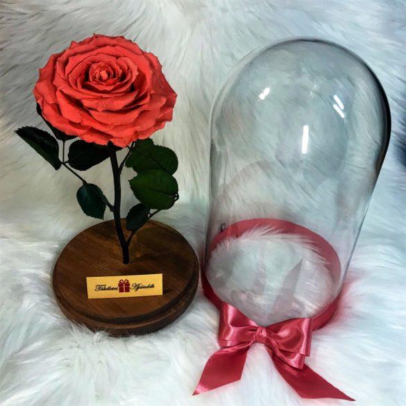 Nagy méretű búrába zárt King Örök Rózsa / Forever Rose - Dark Pink