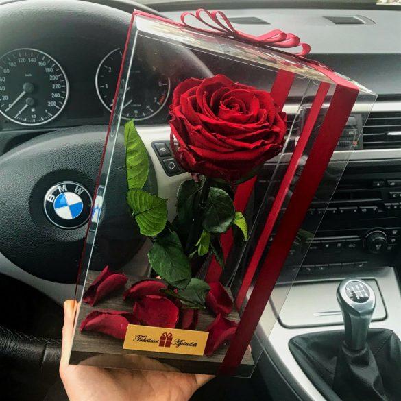 Nagy méretű átlátszó dobozos Örök Rózsa / Forever Rose - Vörös