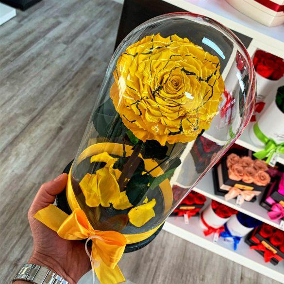 Nagy méretű búrába zárt FESTIVA Örök Rózsa / Forever Rose - Citromsárga