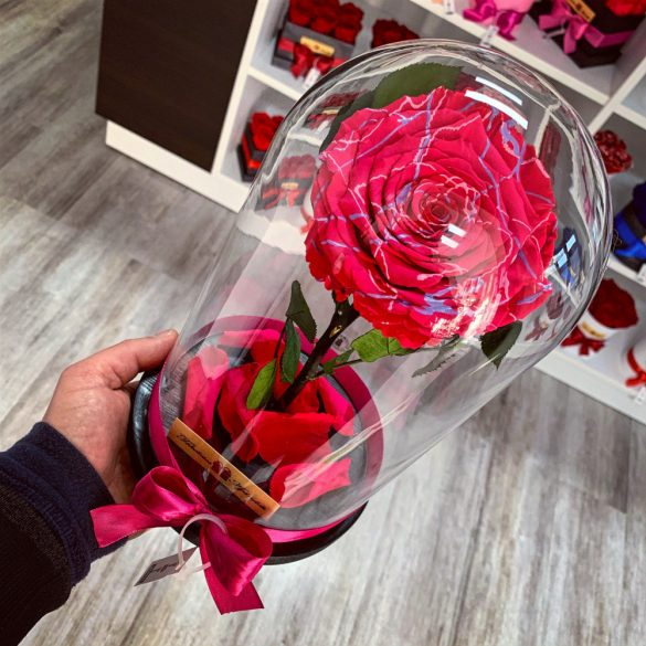 Nagy méretű búrába zárt FESTIVA Örök Rózsa / Forever Rose - Pink
