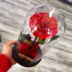Nagy méretű búrába zárt FESTIVA Örök Rózsa / Forever Rose - Vörös