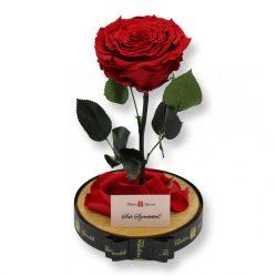 Nagy méretű búrába zárt Extra King Örök Rózsa / Forever Rose - Vörös