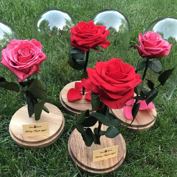 Nagy méretű búrába zárt Örök Rózsa / Forever Rose - Dark Pink