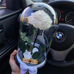 Nagy méretű búrába zárt Örök Rózsa / Forever Rose - Fehér