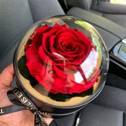 Akryl kupolába zárt Örök Rózsa / Forever Rose  - Vörös