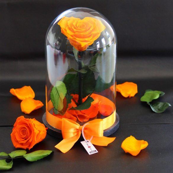 Nagy méretű búrába zárt Szív alakú Örök Rózsa / Forever Rose - Narancssárga