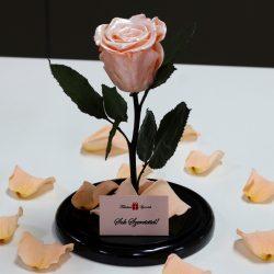 Nagy méretű búrába zárt METÁL Örök Rózsa / Forever Rose - Barack