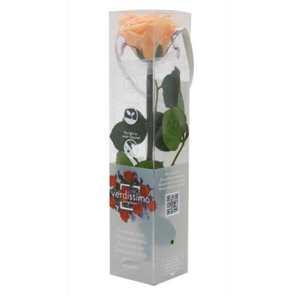 Örök Rózsa szál / Forever Rose PVC díszdobozban 30 cm - Barack