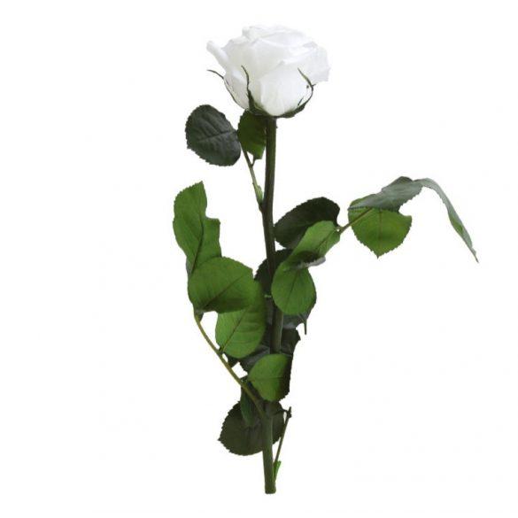 Örök Rózsa szál / Forever Rose PVC díszdobozban 30 cm - Fehér