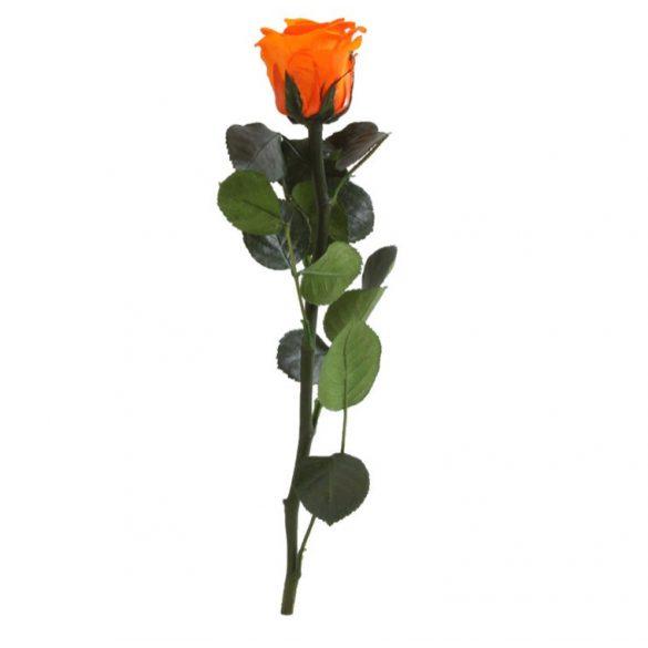 Örök Rózsa szál / Forever Rose PVC díszdobozban 30 cm - Narancs
