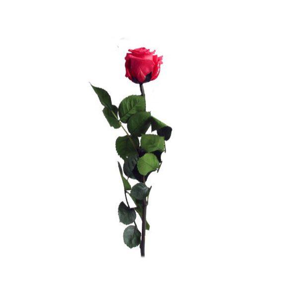 Örök Rózsa szál / Forever Rose PVC díszdobozban 30 cm - Sötét Pink