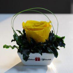 XL Örök rózsa / Forever Rose Kerámia tálban - Citromsárga
