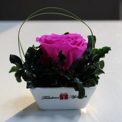 XL Örök rózsa / Forever Rose Kerámia tálban - Pink