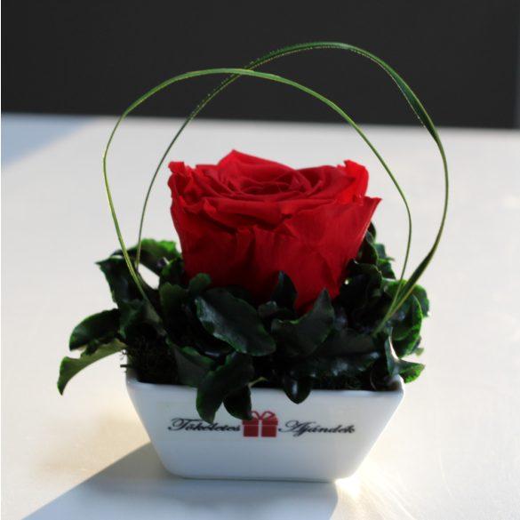 XL Örök rózsa / Forever Rose Kerámia tálban - Piros