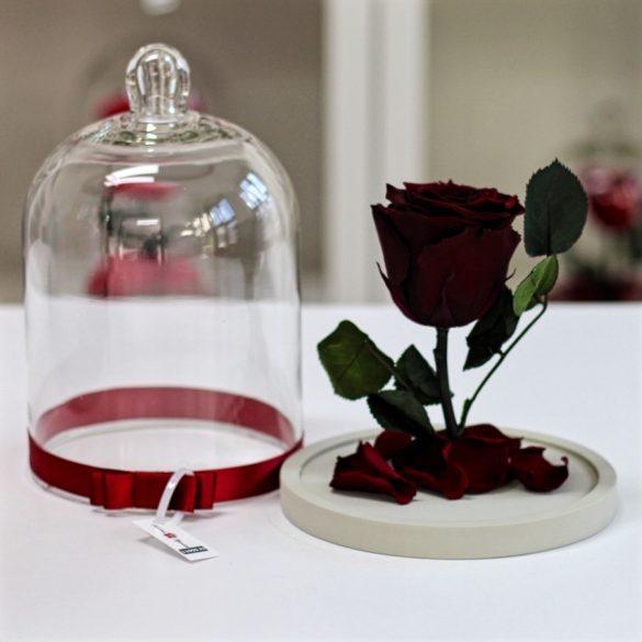 Standard búrába zárt Örök rózsa / Forever Rose - Burgundy