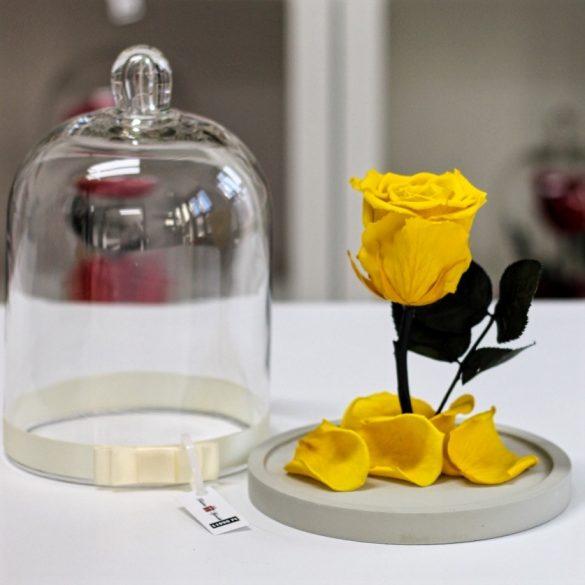 Standard búrába zárt Örök rózsa / Forever Rose - Citromsárga