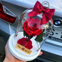 Standard  búrába zárt Örök rózsa / Forever Rose - Piros