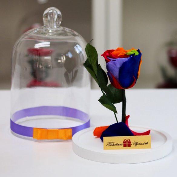 Standard búrába zárt Örök rózsa / Forever Rose - Rainbow