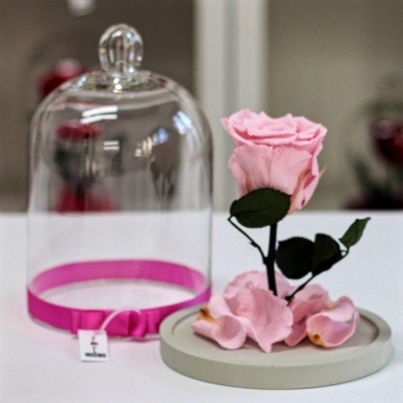 Standard búrába zárt Örök rózsa / Forever Rose - Rózsaszín