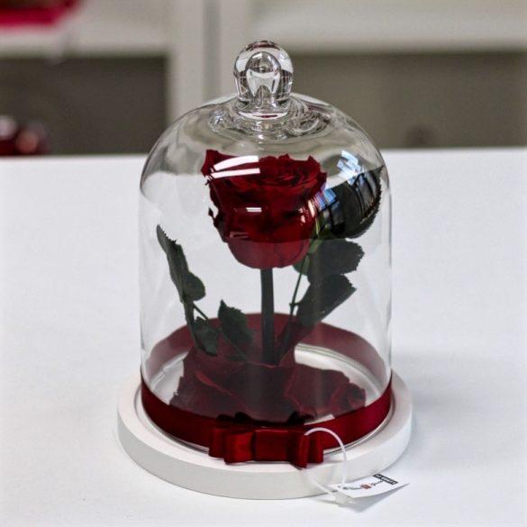Standard búrába zárt Örök rózsa / Forever Rose - Vörös