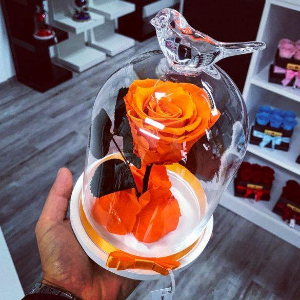 Standard méretű búrába zárt Örök rózsa / Forever Rose - Narancssárga