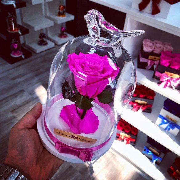 Standard méretű búrába zárt Örök rózsa / Forever Rose - Pink