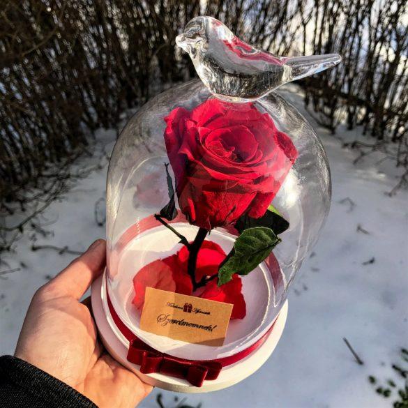 Standard méretű búrába zárt Örök rózsa / Forever Rose - Vörös