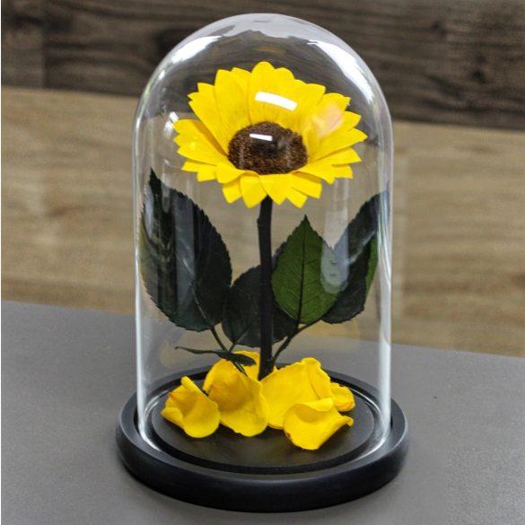 Nagy méretű búrába zárt tartósítot Napraforgó / Sunflower - Citromsárga