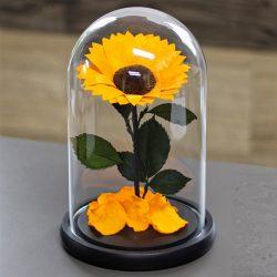 Nagy méretű búrába zárt tartósítot Napraforgó / Sunflower - Narancssárga